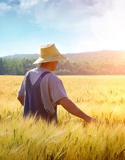 Decisive_Farming_1626522271