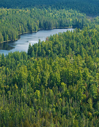 Forestry_Industry_828005786