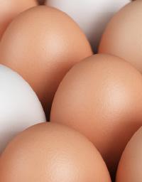 Gray_Ridge_Egg_Farms_833854844