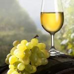Ontario_s_Wine_Region_900022053