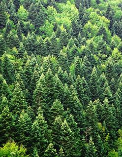 Wood_Buffalo_444180944