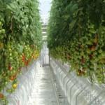 windset_farms