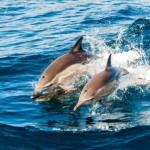 Dolphins - depositphotos