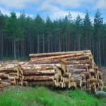 forestry - depositphotos_4453227-stock-photo-woodpile-in-scottish-forest