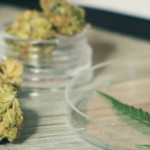ghovanloo-medical-cannabis
