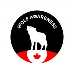 Photos reveal Western Canada's wolf kill program is really a trophy hunt