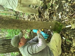 Helena Agri-Enterprises introduces environmentally friendly way to save Colorado trees from invasive pests