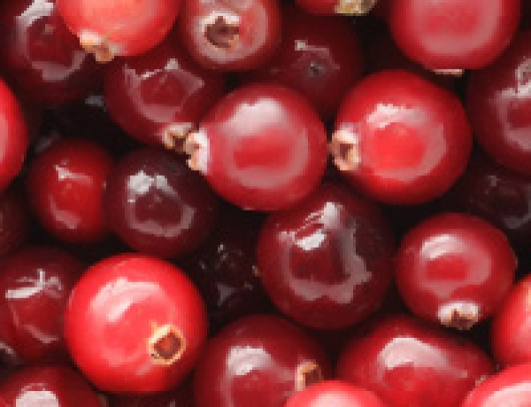 Atlantic Mist Cranberries