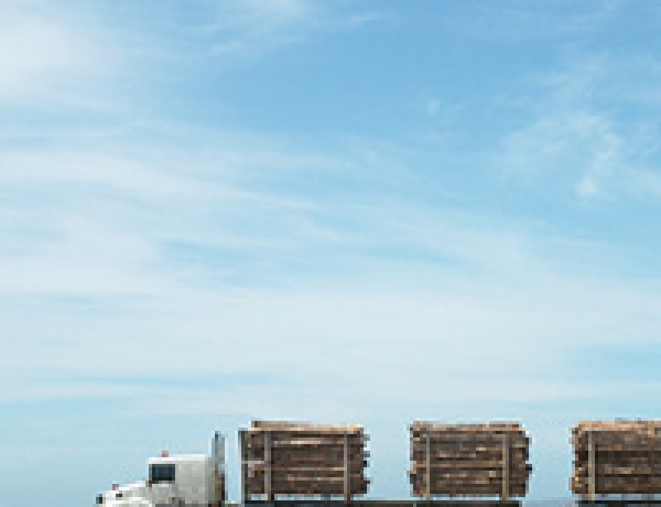 Forestry and Lumber Key Sectors of our National Economy