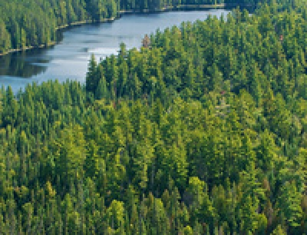 Canada's forestry industry: Investing for growth
