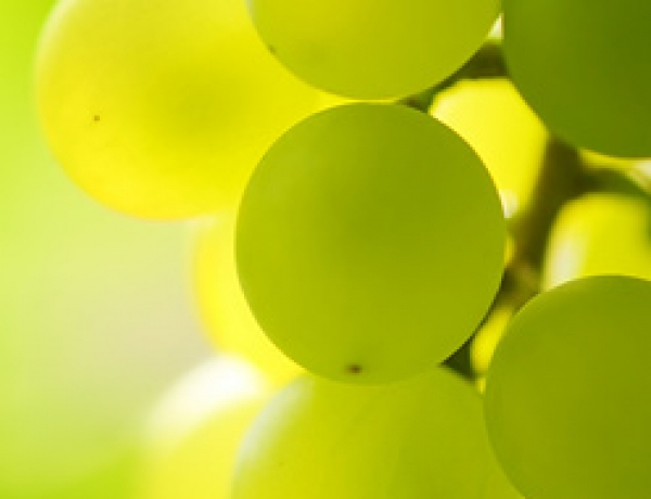 Jost Vineyards
