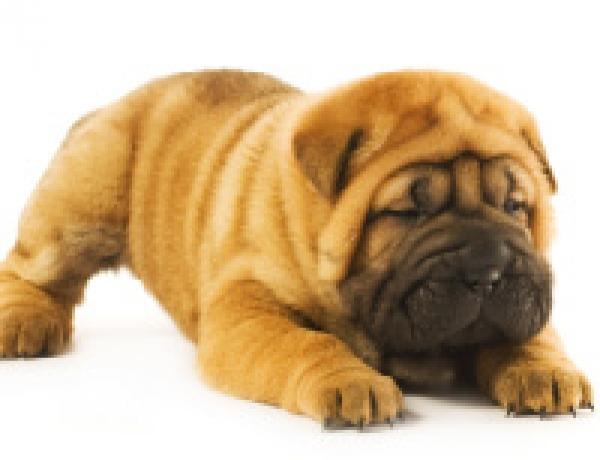 B.C. Bylaw to Halt Puppy Sales