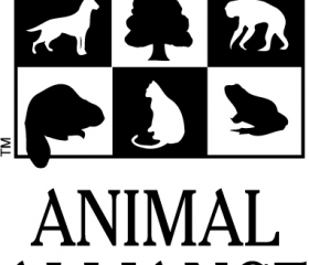 Animal Alliance of Canada: Primates Subject to Cruel Research in Canada