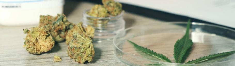 Researchers Studying Cannabis for Anti-seizure Medication