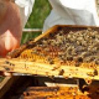 Manitoba Honey Farm Develops First-of-its-Kind 'Smart' Beehive