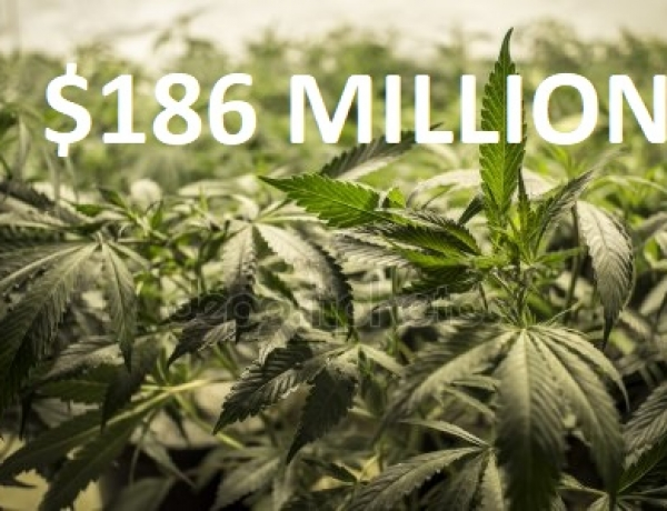 Pot Taxes Net $186 Million for Governments