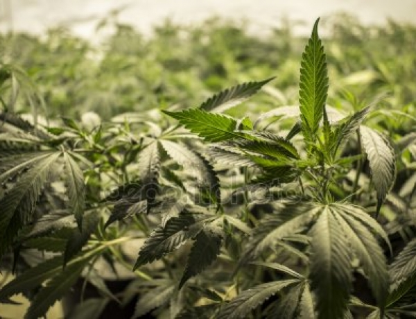 Ontario Cannabis Store Expands Supplier List